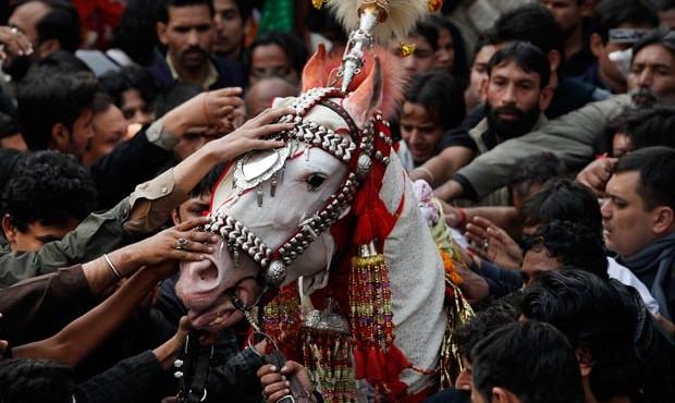 Ashura-pak-horse_1787918i